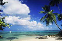 椰子和鸡的完美融合,微微甜的海南风火锅你喜